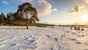与杉木和积雪的领域在日落,俄罗斯,乌拉尔, 3月的冬天风景 库存照片