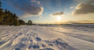 与杉木和积雪的领域在日落,俄罗斯,乌拉尔, 3月的冬天风景 免版税库存图片