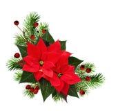 与杉木枝杈、红色莓果和po的圣诞节壁角安排 免版税图库摄影