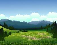 与杉木森林和山背景的风景 库存照片