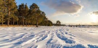 与杉木森林和积雪的领域,俄罗斯,乌拉尔的冬天风景, 库存照片