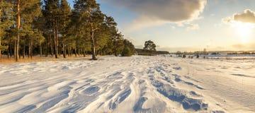 与杉木森林和积雪的领域,俄罗斯,乌拉尔的冬天风景, 库存图片