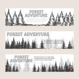 与杉木森林的单色水平的横幅 库存照片