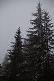与杉木森林的风景雪的 免版税库存照片