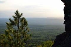 与杉木的乌拉尔山脉土坎 库存照片