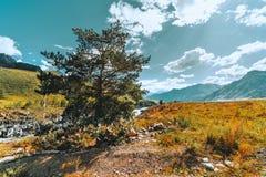 与杉木的广角山风景在前面 图库摄影
