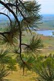 与杉木的科罗拉多视图 库存照片