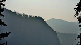 与杉木的Smokey sihouette 免版税库存图片