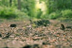 与杉木针的Forrest足迹在特写镜头 免版税库存图片