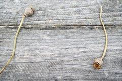 与杉木锥体和木棍子的静物画构成 免版税库存图片