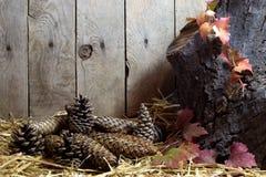 与杉木锥体和秋叶的秋天静物画在干草,木板条背景 库存照片