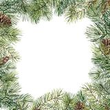 与杉木锥体的水彩圣诞树花卉框架 手画冷杉分支,在白色背景隔绝的杉木锥体 库存图片