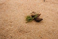 与杉木锥体的说谎在沙子的自然本底和爆沸 免版税图库摄影