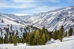 与杉树和多云天空背景的高山顶视图 免版税库存照片
