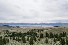 与杉树和山的谷 免版税库存图片