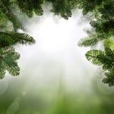 与杉树枝杈的绿色背景 与Boken的抽象边界 免版税库存图片