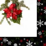 与杉树的一品红红色在白色背景的花和雪 问候圣诞卡 明信片 christmastime 红色白色和 库存照片