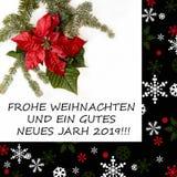 与杉树的一品红红色在白色背景的花和雪 问候圣诞卡 明信片 christmastime 红色白色和 库存图片