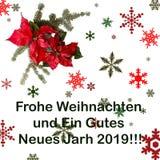与杉树的一品红红色在白色背景的花和雪 问候圣诞卡 明信片 christmastime 红色白色和 免版税库存图片