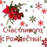 与杉树的一品红红色在白色背景的花和雪 问候圣诞卡 明信片 christmastime 红色白色和 免版税库存照片