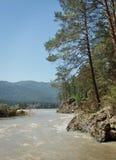 与杉树的夏天风景在河岸 库存照片