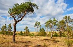 与杉树的干草原风景 免版税库存图片