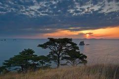 与杉树的晚上风景在海滨 免版税库存照片