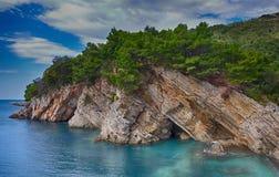 与杉树的沿海岩石 图库摄影