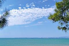 与杉树的海天线 库存图片