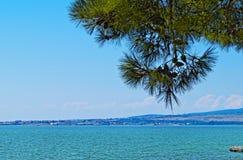 与杉树的海天线 库存照片