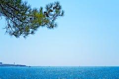 与杉树的海天线 免版税库存图片