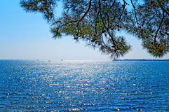 与杉树的海天线 免版税图库摄影