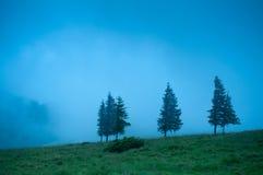 与杉树高地的有雾的早晨风景 库存图片