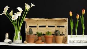 与条板箱的现代室装饰 架子对黑墙壁用装饰仙人掌、玻璃和岩石 郁金香和水芋属在花瓶 影视素材