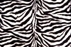 黑白斑马样式 免版税库存图片