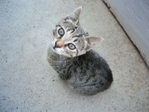 与条纹的小猫 免版税图库摄影