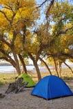 与杨属euphratica结构树的帐篷 库存照片