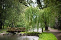 与杨柳的森林风景 库存照片