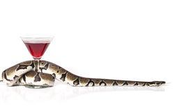 与杯的皇家Python红葡萄酒 免版税库存照片