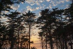 与松树的日落在坎塔布里亚海岸  库存照片