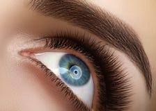 与极端长的睫毛的特写镜头宏观美丽的女性眼睛 鞭子设计,自然健康鞭子 清洗视觉 免版税库存图片