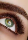 与极端长的睫毛的特写镜头宏观美丽的女性眼睛 鞭子设计,自然健康鞭子 清洗视觉 图库摄影
