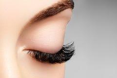 与极端长的睫毛的美丽的女性眼睛,黑划线员构成 完善的构成,长的鞭子 特写镜头时尚眼睛 免版税库存图片