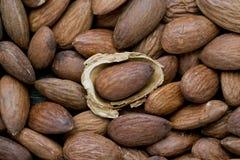 与果壳的杏仁 库存照片
