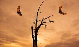 与果蝠万圣夜概念的死的树剪影 免版税图库摄影
