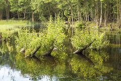 与枝杈的树干 库存照片