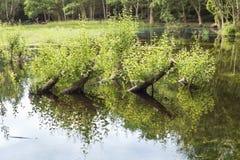 与枝杈的树干 库存图片