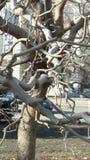 与枝杈的树 免版税库存图片