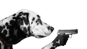 与枪的达尔马希亚狗 免版税库存照片