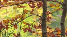 与枯萎的叶子的树在壮观的湖背景  影视素材